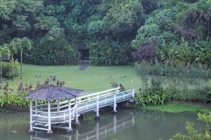 Dock in Paradise
